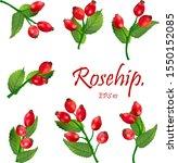 Set Of Red Rosehip Berries On...