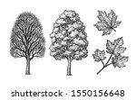 winter and summer maple trees.... | Shutterstock .eps vector #1550156648