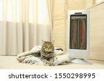 Cute Tabby Cat Near Electric...