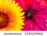 Small photo of Field and meadow flowers, Torn off, photographed in the water. Bright colors of breakaway petals