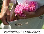 Rose Picking In Southern France