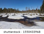 Spring Swamp With Snow And Melt ...