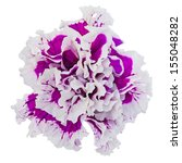 Petunia Flower  Isolated On A...