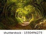 Halnaker Tree Tunnel In West...