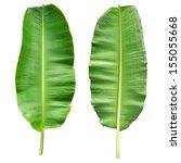 Fresh Banana Leaf Isolated Wit...