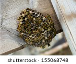 Paper Wasp Nest On Wooden Fence....