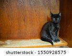 Stock photo black scared kitten sits on a wooden shelf the kitten hid in the corner of the table black kitten 1550928575