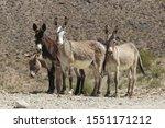 Wild Burros  Silvercreek Road ...