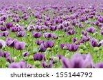 Field Of Purple Poppy