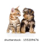 Stock photo tiny little kitten and puppy looking at each other isolated on white background 155209676