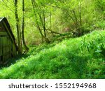 Bright Green Meadow In Late...