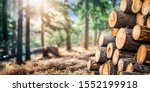 Forest pine and spruce trees. Log trunks pile,  the logging timber wood industry. Wide banner or panorama wooden trunks. - stock photo