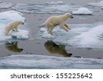 Small photo of mother polar bear and cub jumping across ice floe in arctic ocean north of svalbard norway