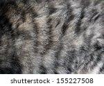 Cat Fur Texture