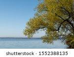 Yellow foliage shines against a blue lake