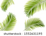 tropical coconut leaf isolated... | Shutterstock . vector #1552631195