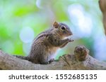 Chipmunk Sits On A Tree And Eats