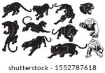 set of  panthers. collection of ... | Shutterstock .eps vector #1552787618