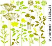Stock vector big set of green plants 155281256