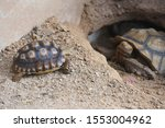 Stock photo close up african spurred tortoise resting in the garden slow life africa spurred tortoise 1553004962