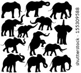 Stock vector set of editable vector silhouettes of african elephants in various poses 155309588