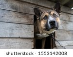 Small photo of sad dog on a chain sitting in a booth on the street. dog with sad eyes. dog on a chain. watchdog