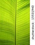 Backlit Fresh Green Palm Leaf...
