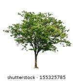 Sindora Siamensis Tree On...