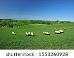 Small photo of Pasturage of a sheep. Shibetsu-shi, Hokkaido.