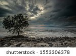 Lone Tree On A Beach At Sunset. ...