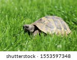A Macro Shot Of A Little Turtle ...