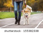 Stock photo dog akita inu on autumn walk 155382338