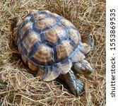 Stock photo sulcata tortoise african spurred tortoise 1553869535