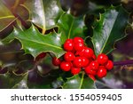 Christmas holly red berries ...