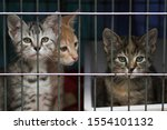 Little Kittens In A Cage Of A...