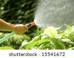 female hand watering the plants with a garden hose with sprinkler - stock photo
