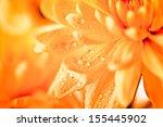 Close Up Of Orange Flower Aste...