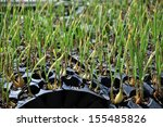Newly Sprouted Onion Seedlings...
