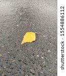 Small photo of fallen yellow leaf on wet asphalt. wet leaf on grass