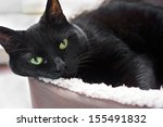 Stock photo a black cat lying down in their bed 155491832