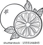 Orange Fruit Line Art Vector...