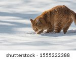 Photo Of A Red Cat That Digs I...