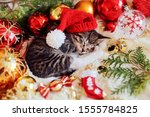 Stock photo funny kitten sleeps in christmas bright red decorations happy new year 1555784825