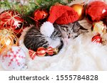 Stock photo funny kitten sleeps in christmas bright red decorations happy new year 1555784828