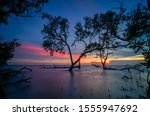 Trees And Mangroves Silhouette...
