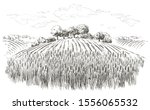rural landscape field wheat ... | Shutterstock .eps vector #1556065532