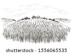 rural landscape field wheat ... | Shutterstock .eps vector #1556065535