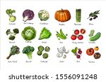 set of colored vegetables.... | Shutterstock .eps vector #1556091248