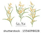 vintage botanical illustration. ... | Shutterstock .eps vector #1556098028