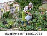 Senior Woman Watering Vegetable ...